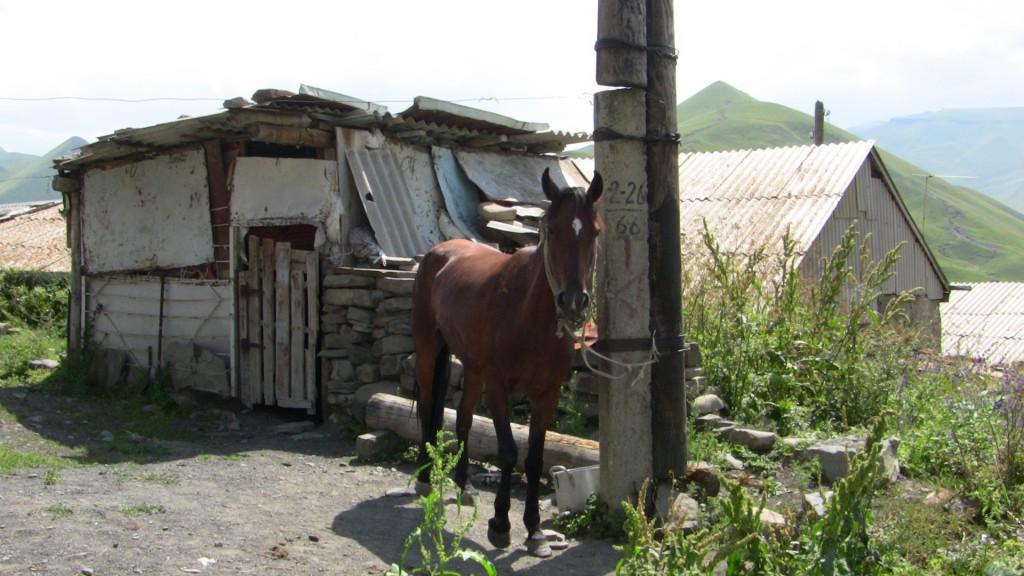 Конь - Хосрех